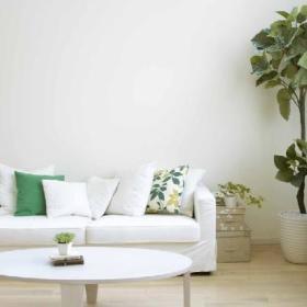 居室空间 多一点绿色少一点雾霾