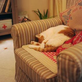 沙发单人沙发图片