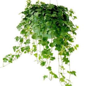 植物装修效果展示