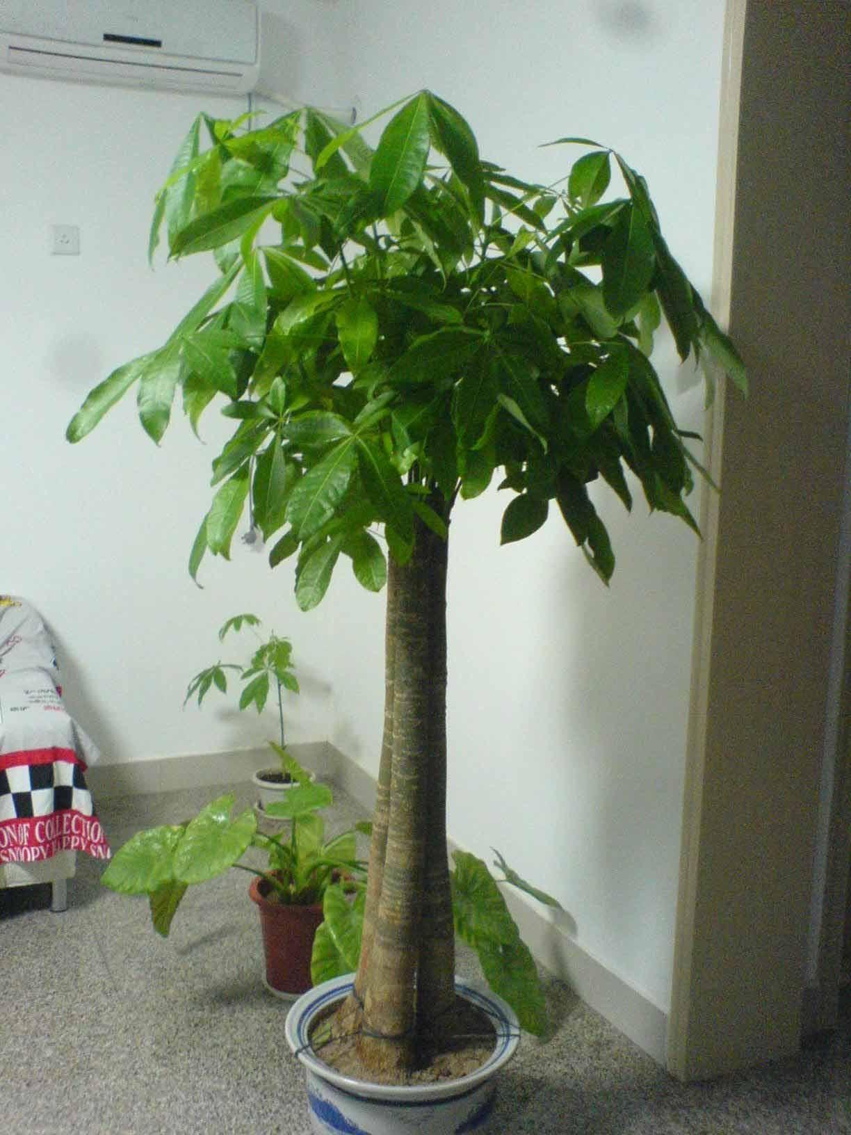 吸收甲醛的室内植物_新家吸甲醛,摆哪些植物比较好? - 装修保障网