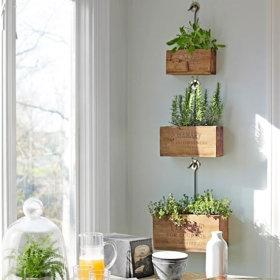 【墙上的绿意】植物上墙你知道吗?