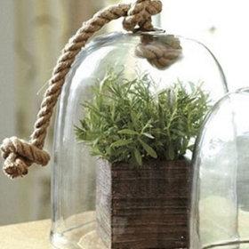 植物装修案例