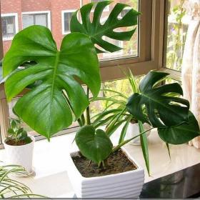 装修后的新家,摆放哪些植物比较好?